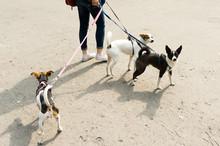 Trzy Psy Na Smyczy