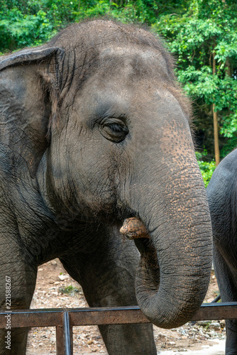 Deurstickers Olifant Elephant