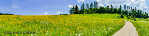 Feldweg durch Sommerlandschaft - 221588456