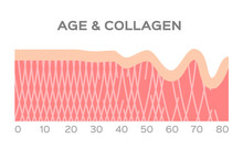 Collagen In Younger Skin And A...