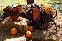 Halloween Cart With Pumpkins