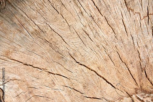 Obraz na plátně detailed wood texture of beech