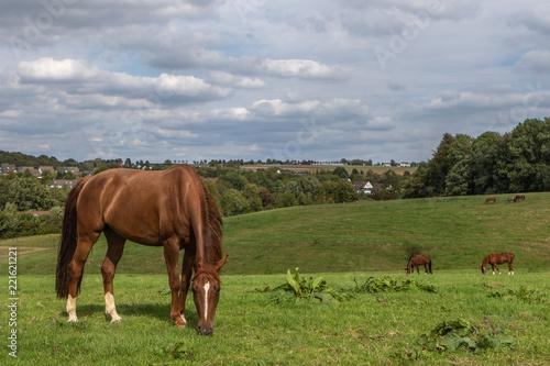Obraz na plátně weite Landschaft mit Pferden