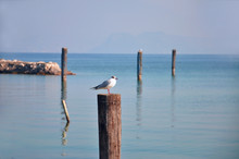 A Seagull On A Wooden Pole Pla...