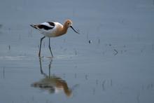 Bird With Long Legs Walking In...