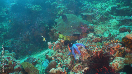 Foto op Plexiglas Panoramafoto s Tropical fish on coral reef at diving. Wonderful and beautiful underwater world with corals and tropical fish. Hard and soft corals. Philippines, Mindoro.