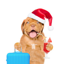 Funny Puppy In Red Christmas Hat Holds Tropical Cocktail And Suitcase. Isolated On White Background