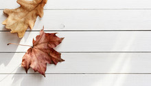 Autumn Leaves On White Wooden ...