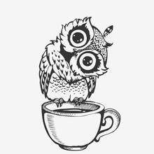 Cute Owl Cartoon Character Line Sketch