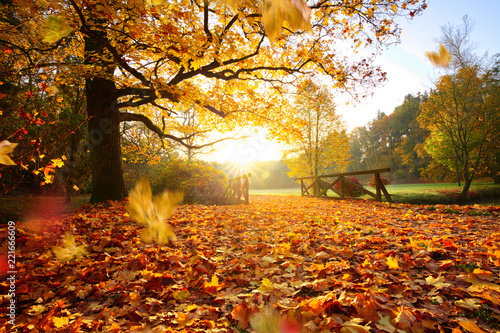 Foto op Canvas Herfst Autumn forest. Beautiful rural scenery.