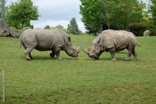 Foto op Aluminium Neushoorn Rhino 2