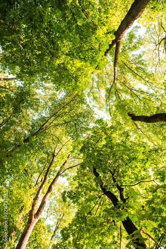 Keuken foto achterwand Bossen Treetop, canopy of the tree