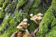 Mushrooms On A Tree Trunk Cove...