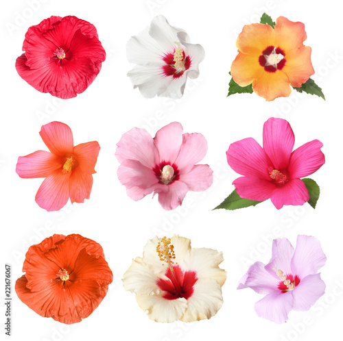 Set with beautiful tropical Hibiscus flowers on white background