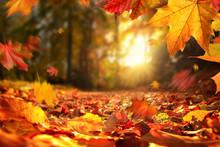 Stimmungsvolle Szene Im Herbst...
