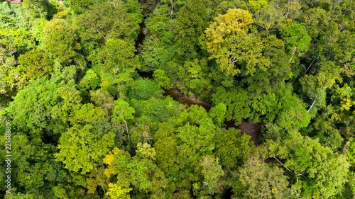 Fotomural  Top aerial view of virgin jungle