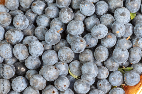 Valokuva  Close up of ripe blue sloes in the kitchen