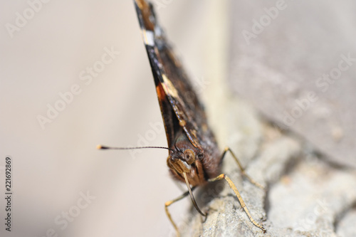 Foto op Plexiglas Macrofotografie Macro photo of butterfly face with proboscis and whisk antennae
