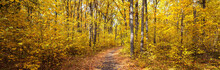 Autumn Road Through Deciduous Forest, Panoramic Banner