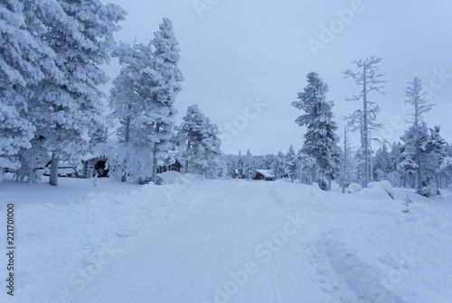 Fotografie, Obraz  Cold winter in north of Finland