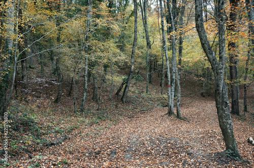 Spoed Foto op Canvas Cappuccino Дорога в осеннем лесу