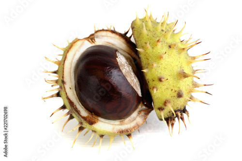 Opened chestnut in a shell on white background