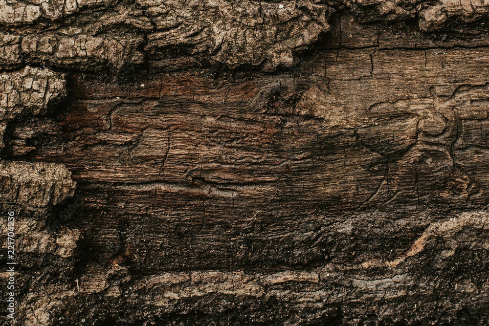 Fototapety, obrazy: texture of the trees in the forest