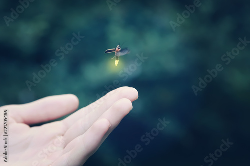 Valokuva  Firefly flying away from a child's hand