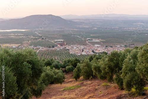 Between olive trees there is a sensational view to the small town of Arquillos. Photograph taken in Jaen, Andalucia, Spain.