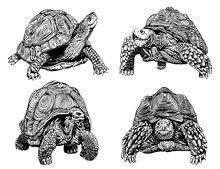 Graphical Set Of Tortoises Isolated On White Background,vector Sketchy Illustration