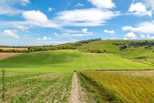 Foto op Canvas Pistache Green farmland in Sussex, taken on a sunny late summer's day