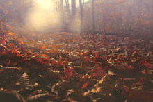 Morning Sunlight And Autumn Leaves On A Forest Path.