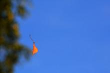 First Autumn Leaf, September