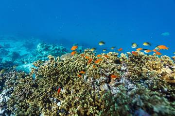 Fototapeta na wymiar Coral reef underwater