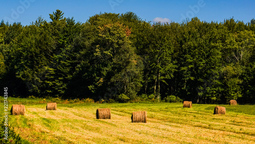 Photo round bales of hay left on the fields after mowing in late summer in Vermont