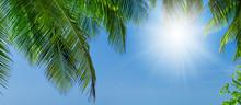 View Through Coconut Palm Tree...