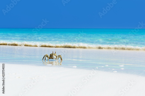 Fotografie, Obraz  Ghost crab on white sandy beach