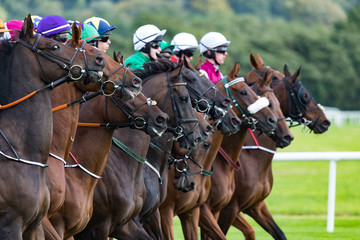 Race horses and jockeys lining up at the start line on the race track