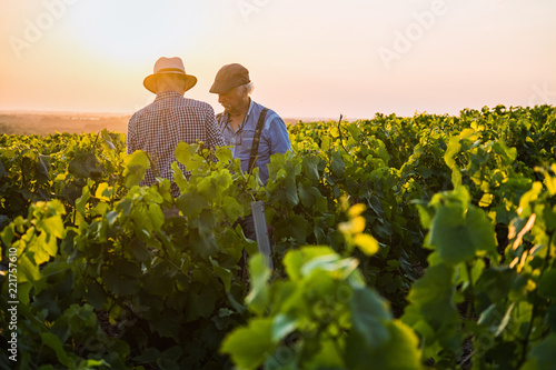 Photo  Two French winegrowers in their vines at sunset