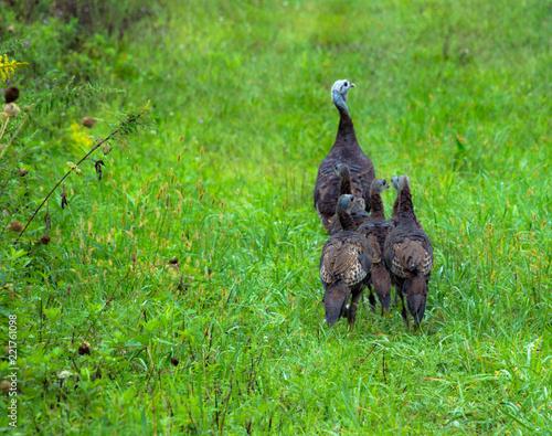 Fényképezés  turkey