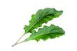 Leinwandbild Motiv gerbera green leaf isolated on white background