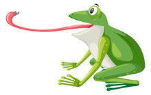 A Green Frog On White Background