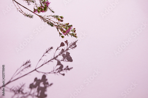 Foto op Canvas Bloemen Beautiful floral composition with a branch of pink flowers on a pink background.