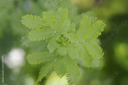 Photo 葉, 緑, 植える, 自然, leaf, アップ, 草, 庭, グリーン, しんらつな, 植物, green, ナチュラル, 植える, マクロ, 森