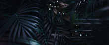 Website Banner Of Tropical Pal...