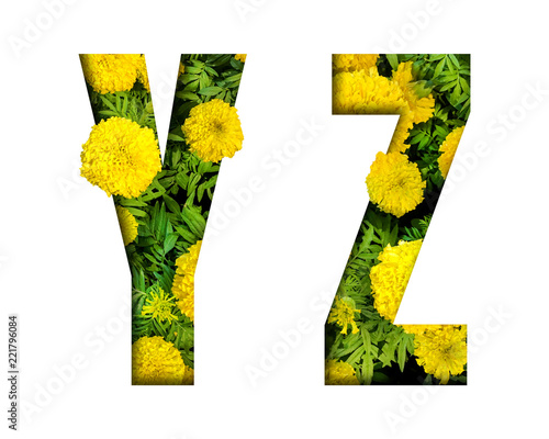Alphabet Y, Z made from marigold flower font isolated on white