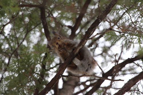 Zdjęcie XXL wiewiórka (widok z dołu)