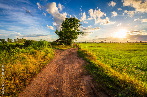 Tuinposter Platteland Road in Sunset Rice Field