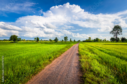 Dirt Road in Rice Field