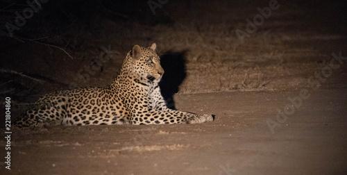 Deurstickers Luipaard Leopards of Africa